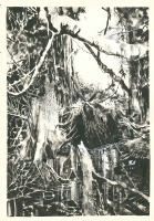 Bill Sienkiewicz - Swampthing 61 pinup, Comic Art