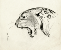 Frank Frazetta Leopard Head Sketch Comic Art
